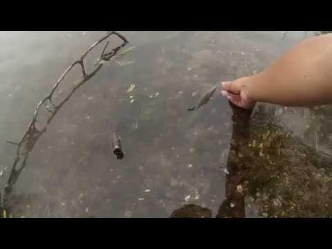 Exploring An Unnamed Lake And Falls Township Lake On 4th Of July (Cinnaminson/Falls Township)