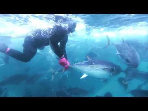Careers In The Australian Southern Bluefin Tuna Industry