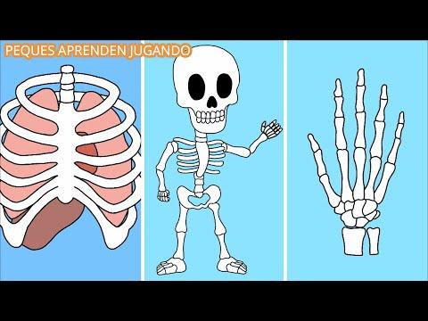 Los huesos para