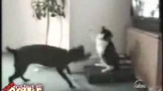 Gatos Chistosos - Risa