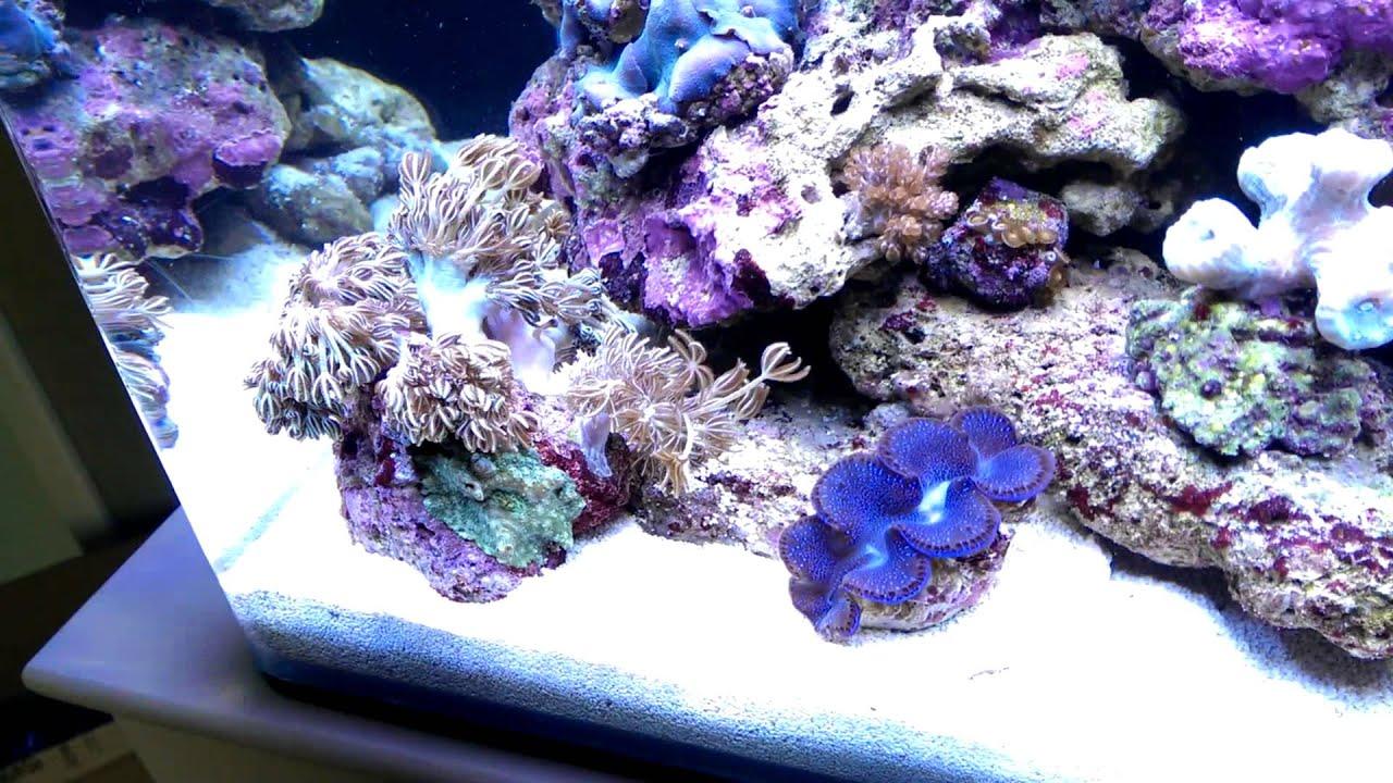 dennerle marinus meerwasser nano cube nano reef tank 60l. Black Bedroom Furniture Sets. Home Design Ideas