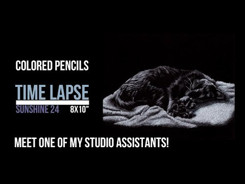 Introducing Sunshine,  my studio assistant - BLACK CAT Colored Pencils on Black Paper demo