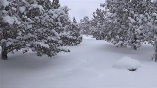 Gambar cover Oregon Snow