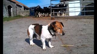 Rusty, Our Old Farm Dog