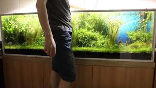 pruning plants other maintenance work for planted severum tank