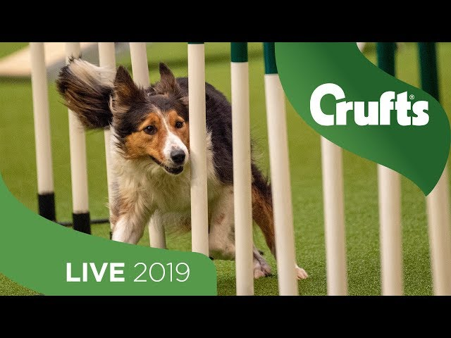 Crufts 2019 Day 1 - Part 1 LIVE