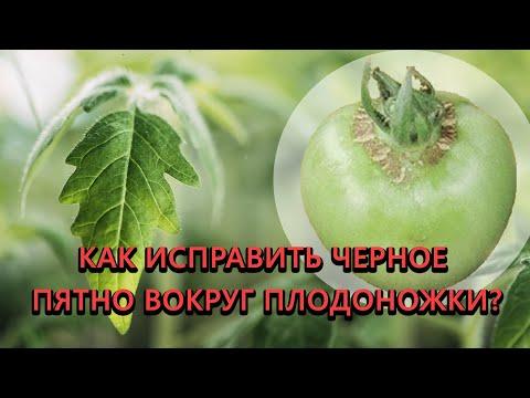 Недостаток бора у томатов. Как распознать, чем опасно и как исправить.