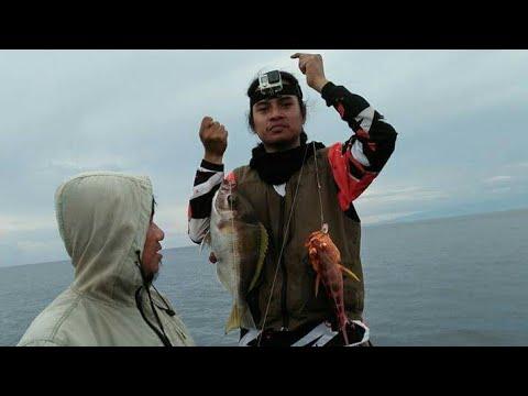 Mancing Dasaran pakai Umpan Cumi Strike Truss !!! handline fishing