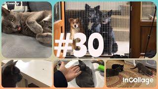 #30 Приколы/ забавные/ коты/ собаки/ животные/ смешные животные