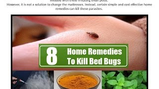 Kill Bed Bugs At Home Remedies To Kill Bed Bugs