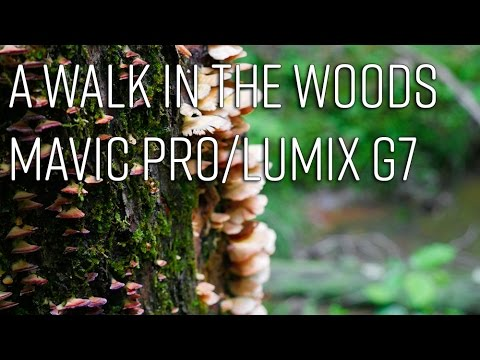 A Walk In The Woods - Mavic Pro/Lumix G7 Film