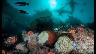 Scuba Diving in Monterey Bay, California