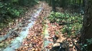 Lucy - Der Spürhund