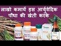Ayurvedic Plant Shatavari  Farming Business Investment plans in Investing Shatavari Products Benefit