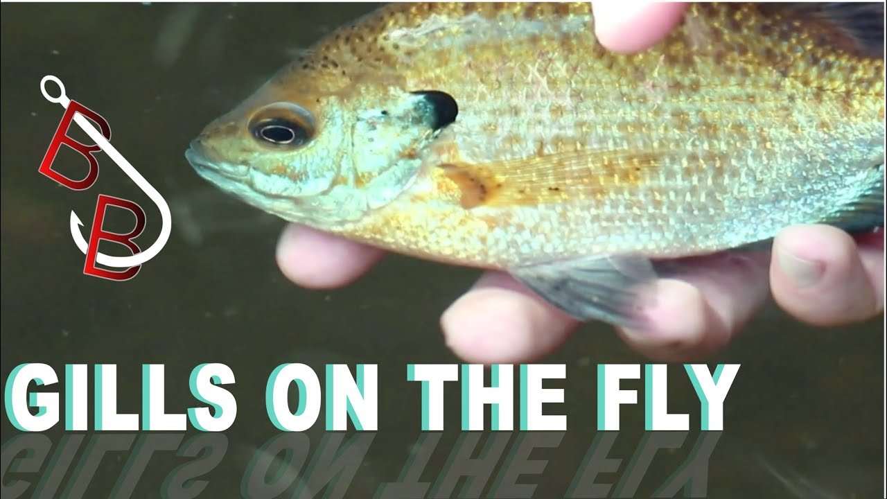 FIRST FLY FISHING EPISODE!!! (Beautiful)