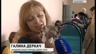 Вести-Хабаровск. Выставка кошек