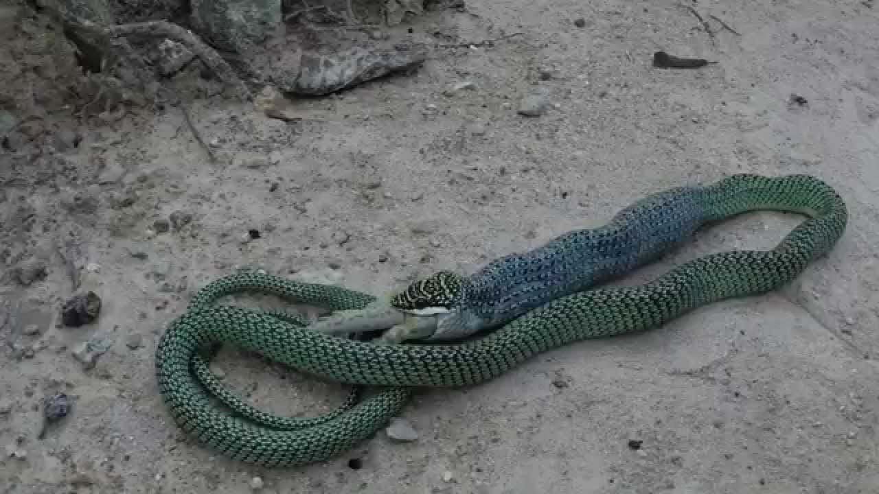 how to get rid of tree snake