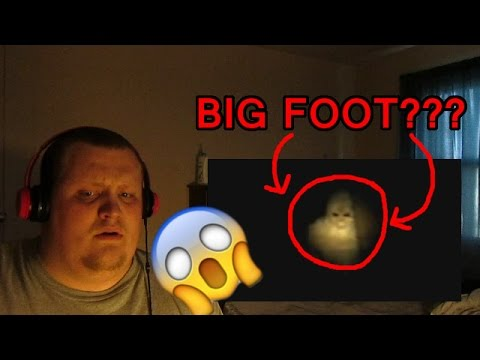 Mysterious Creatures Caught On Camera Spotted In Real Life Reaction