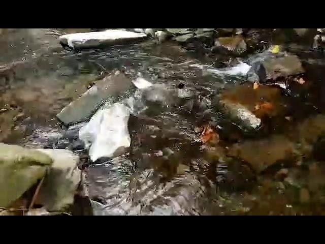 Wilton Lodge Park Dean Burn Hawick - 4K Quality Clip