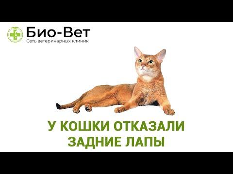 У кота болят задние лапы