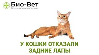 У кошки отказали задние лапы. Ветеринарная клиника Био-Вет.