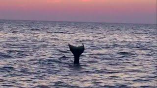 Real Life Mermaid Melissa footage moonlit ocean beach waves at…