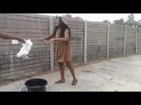 Animal brutality