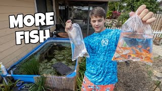 BUYING *COLORFUL* FISH for TURTLE POND!!!