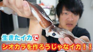 生きたイカで塩辛を作って食べようじゃなイカ!! thumbnail