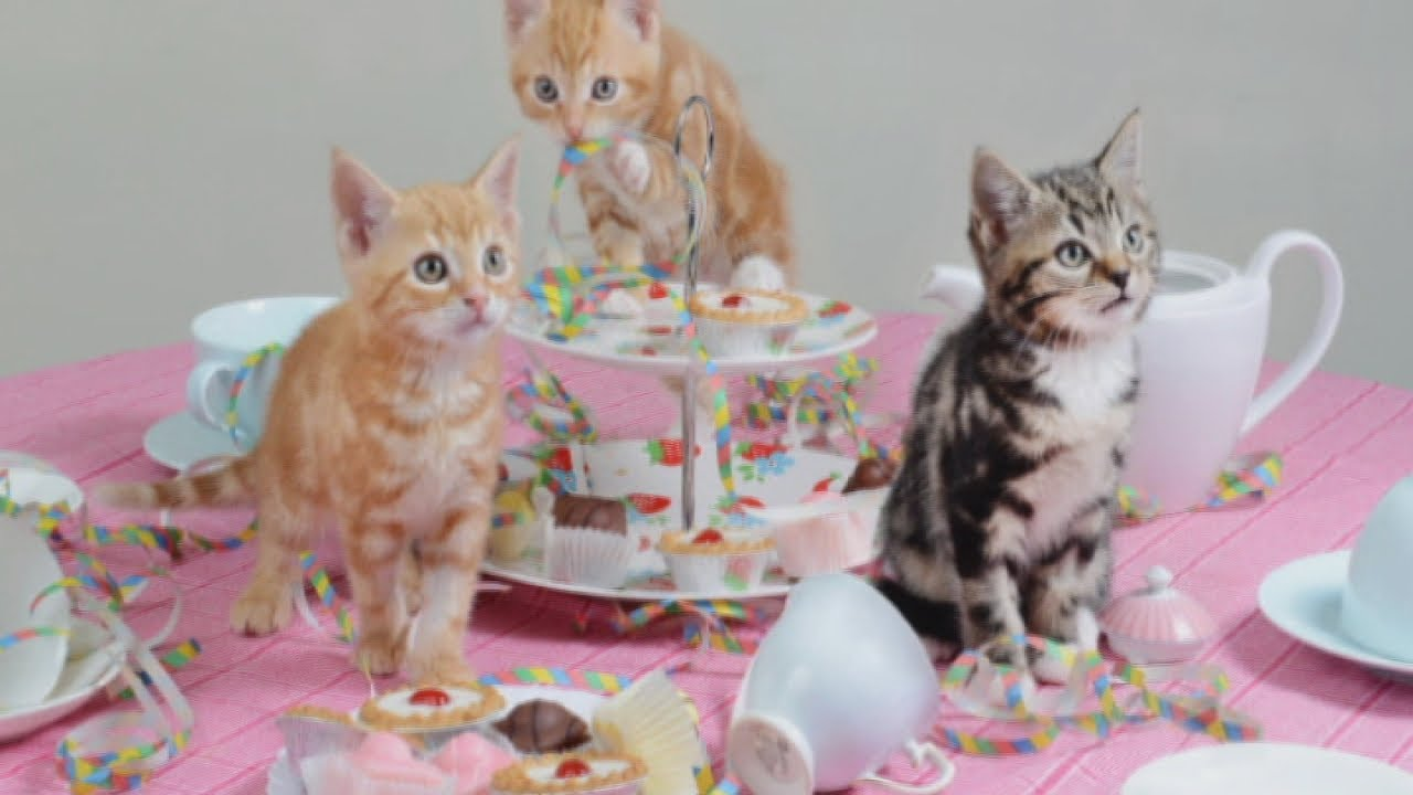 Cute cats! Homeless kittens enjoy tea party for animal charity - YouTube