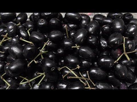 Ingelegde Jamun fruit