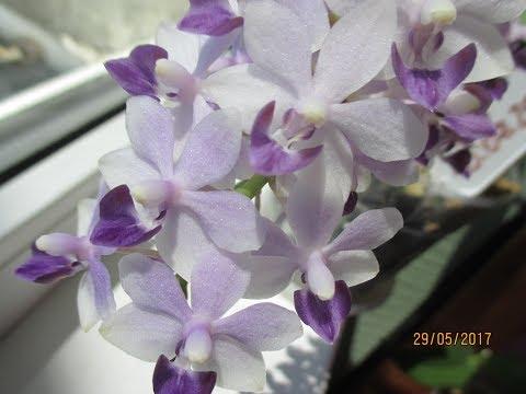 Мини орхидея - orchid-