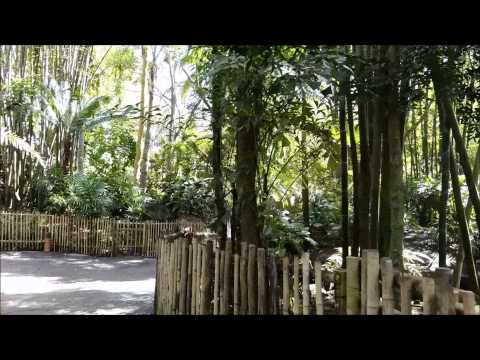 The Oasis Exhibits, Disney's Animal Kingdom, Walt Disney World Resort
