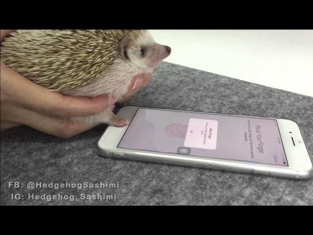 The safest fingerprint in the world