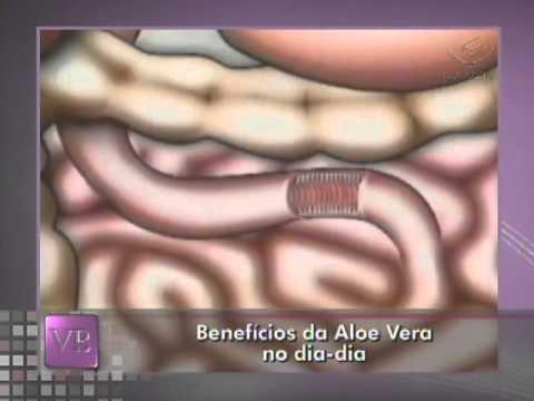 Benefícios da Aloe Vera no dia-a-dia - 14/11/2011