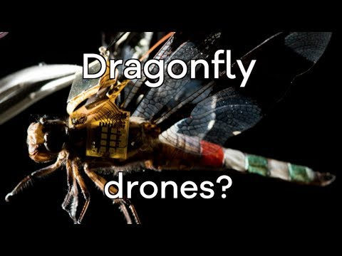 Living dragonfly drones take flight – BBC Click