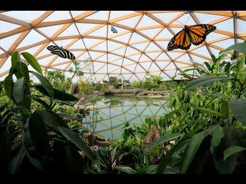 Ontdek Amazonica: het mooiste vlinderparadijs van Europa in Diergaarde Blijdorp Rotterdam