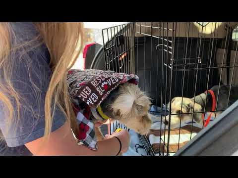 Dogs from House Fire Get Rescued July 14 2020