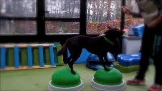 Balanceren - Sport en Spel voor Dieren