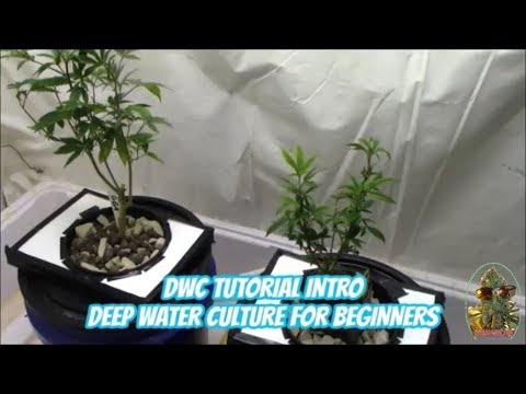 DWC Tutorial - Deep Water Culture For Beginners