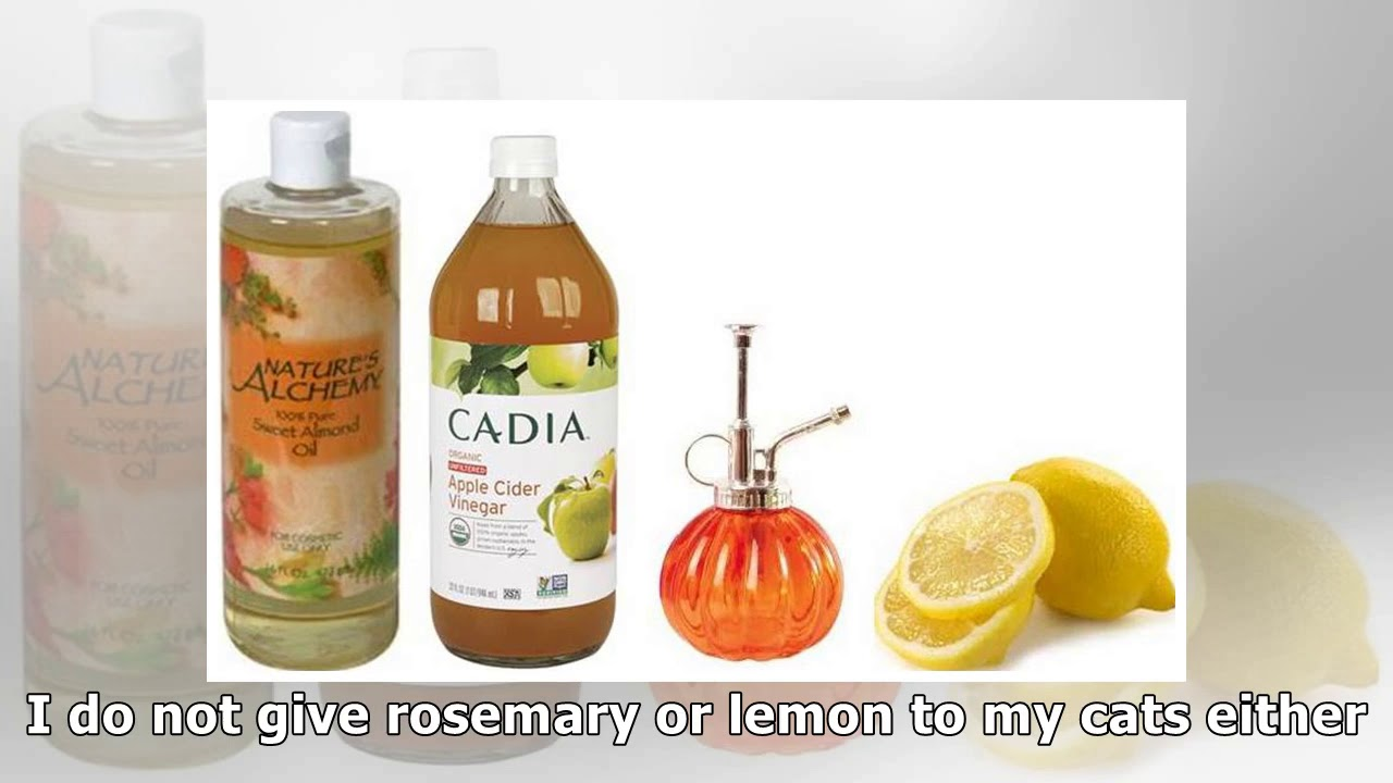 Homemade Natural Flea Spray Rosmary, Lemon, and Apple Cider Vinegar