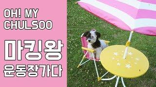 마킹왕 철수 반려견 운동장 가다/ 강아지 브이로그/ 애견동반 추천