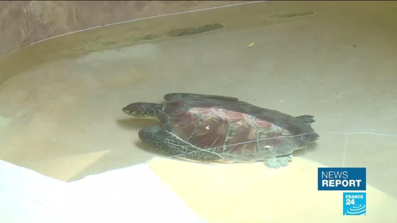 فرانس 24:Save the turtles! A clinic in Kenya fights the effects of plastic pollution