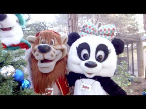 Christmas Episode - Jungle Bells - Holiday Leftovers - Christmas Spirit
