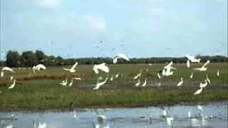 Những Cánh Chim Lang Thang
