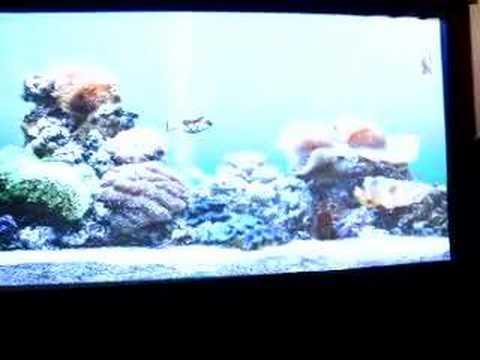 10 Foot Screen Cat Watches Fish Aquarium Screen Saver