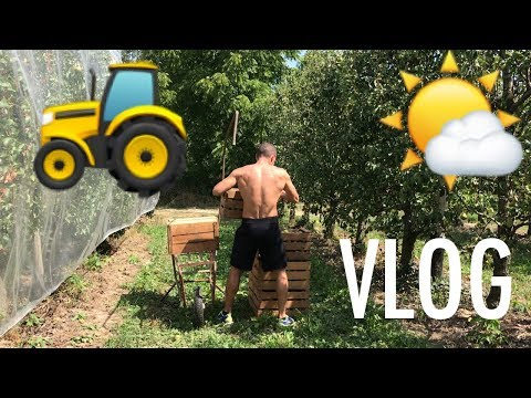 🚜-cambio-mestiere...👨🌾-per-1-giorno---vlog-nei-campi