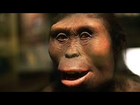 who is Lucy the Australopithecus