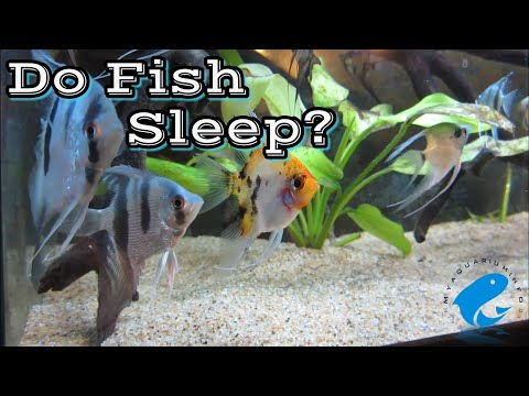 Do Fish Sleep? - How Do Fish Sleep? Do Fish Sleep In Aquarium?