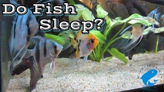 Do Fish Sleep? - How Do Fish Sleep? Do Fish Sleep In Aquarium?